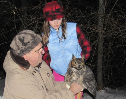 great horned owl captive